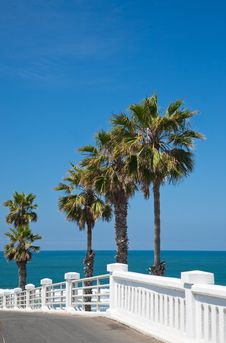 Free Palm Trees And Walkway By A Beach In California Stock Image - 19839111