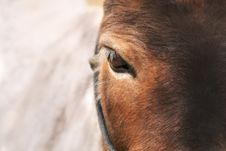 Free Horse S Eye Royalty Free Stock Images - 19839119