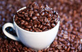 Free Coffee Beans Royalty Free Stock Images - 19843799