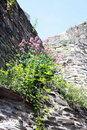 Free Flowers On A Castle Wall Stock Photos - 19844623
