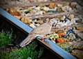 Free Bird Rest On Train Track Stock Image - 19845051