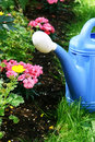 Free Blue Watering And Flowers Royalty Free Stock Photo - 19848745