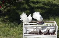 Free Two White Doves From A Cage Royalty Free Stock Photo - 19840455