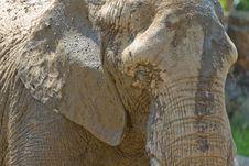 Muddy Elephant Stock Photos