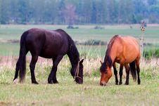 Free Horses Royalty Free Stock Image - 19841066
