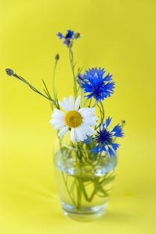 White And Blue Wild Flowers Stock Image
