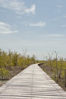Free Footpath Between Mangrove Forest . Stock Image - 19842401