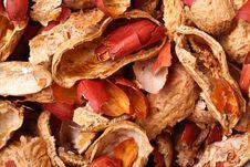 Free Peanut Nature Texture Stock Photo - 19843470