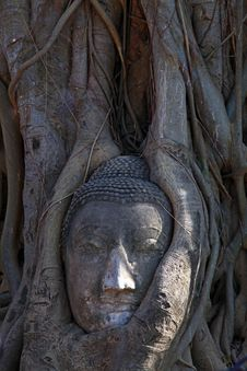 Free Buddha Head In Tree Root Royalty Free Stock Photo - 19843845