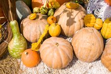 Free Colorful Pumpkins Collection Royalty Free Stock Photos - 19844668