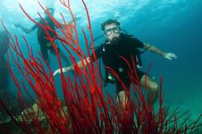 Free Scuba Divers And Red Coral Stock Photos - 19845133