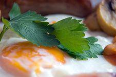 Free Coriander With Egg Stock Photo - 19847750