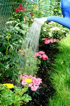 Free Water Pouring And Blooming Flower Bed Royalty Free Stock Photography - 19848777