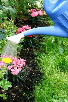Free Water Pouring And Blooming Flower Bed Royalty Free Stock Photos - 19848808