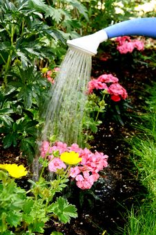 Free Water Pouring And Blooming Flower Bed Royalty Free Stock Photo - 19848835