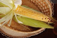 Free Corn 7 Stock Images - 19849054