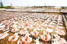 Free Squid Stock Photos - 19849353