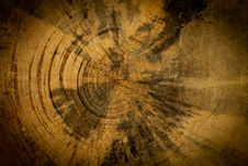 Old Wood Texture (detail Of The Trunk Of A Tree) Stock Photos