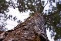 Free Bottom-fir Stock Images - 19850854