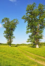 Free Country Landscape With Meadow And Trees Royalty Free Stock Photos - 19851928