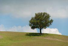 Free Tree In Tuscany Royalty Free Stock Image - 19850356