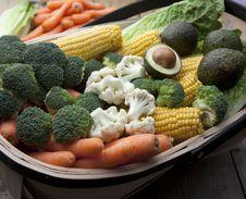 Free Vegetable Harvest Royalty Free Stock Photo - 19851295