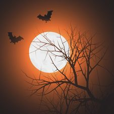 Free Bats At Night Time Royalty Free Stock Photography - 19851357