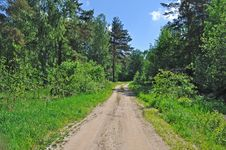 Free Country Road In Forest Stock Image - 19851811