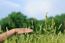 Free Hand Touching Grass Royalty Free Stock Photography - 19851887