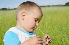 Free Little Boy Smelling Marguerite Stock Image - 19851991