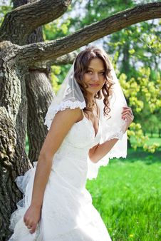 Free Attractive Bride Stands About Trees Royalty Free Stock Photography - 19852187