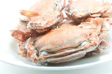 Free Crab Stock Photos - 19853853