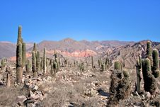 Free Andes Landscape Royalty Free Stock Photography - 19853937