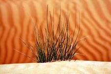Desert Sand Dunes Life Stock Photos