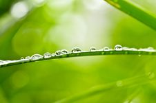 Free Water Green Leaf Royalty Free Stock Photography - 19854287