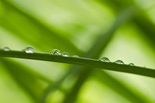 Free Water Green Leaf Royalty Free Stock Images - 19854319