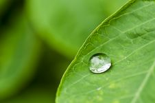 Free Water Green Leaf Royalty Free Stock Images - 19854449