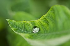 Free Water Green Leaf Stock Images - 19854514