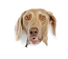 Free Dog Royalty Free Stock Image - 19854576