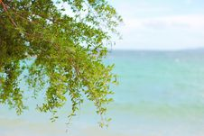 Free Beach With The Tree Royalty Free Stock Images - 19855049