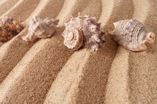 Seashells In Sand Royalty Free Stock Images