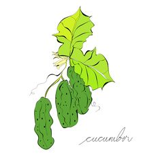 Free The Green Cucumbers Stock Image - 19855221