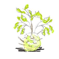 Free Fresh Celery With Root Leaf Stock Photography - 19855262