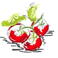 Free Tomato Royalty Free Stock Photos - 19855268