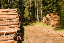 Free Timber Cutting Royalty Free Stock Photo - 19856185