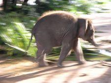 Free Baby Asian Elephant Stock Images - 19856314