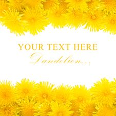 Free Yellow Dandelion Isolated On A White Stock Image - 19867751