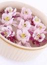 Free Columbine Flowers Stock Photo - 19873470