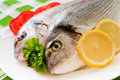 Free Gilt-head Bream Stock Image - 19878621