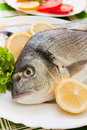 Free Gilt-head Bream Stock Photos - 19878633